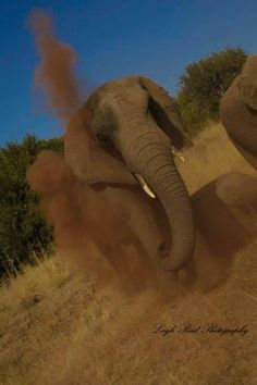 Cooling down in a dust bath Kruger National Park, African Elephant, Lonely Planet, Elephants, Travel Guide, South Africa, Planets, Wildlife, Bath