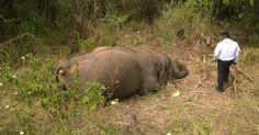 Quatro elefantes morrem atropelados por trem em Sri Lanka