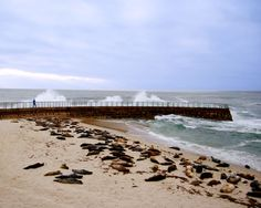 Seal Beach, CA (they're just sleeping)