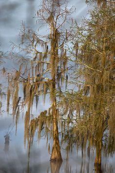 foggy morning, Lake Martin, Louisiana