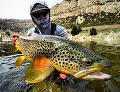 www.wadinglab.com Only with the right fly fishing gear you can catch these fish. www.wadinglab.com