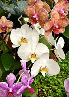 See great new exhibits, visit vendors and even get your orchid repotted in an expanded Orchid Show to take place 10 a.m. to 5 p.m Saturday, Jan. 24 to Sunday, March 1 at  the Buffalo & Erie County Botanical Gardens, 2655 South Park Ave., Buffalo.