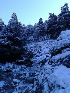 Bosque de pinsapos en la Sierra de las Nieves 2011 Ronda