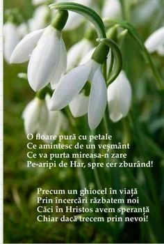 8 Martie, Hello Spring, Dalai Lama, Spirituality, Faith, God, Flowers, Merry, Bible