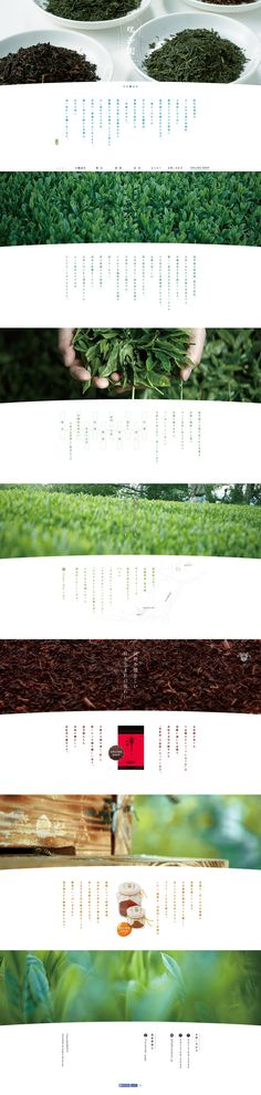 love the fresh/nature aesthetic Poster Layout, Book Layout, Web Layout, Layout Design, Website Layout, Food Web Design, Best Web Design, Tea Design, Book Design