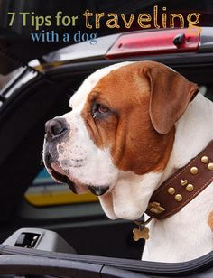 7 Tips for traveling with a dog