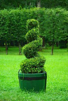 Los topiarios no son un recurso exclusivo para jardines públicos, señoriales o palaciegos. En nuestro jardín podemos usarlos también y no son tan complicados ni costosos de mantener como podemos pe…