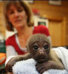 Cutest baby monkey