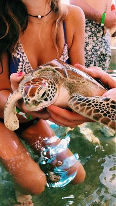 Summer Girl In Lace Bikini Saving Sea Turtle In Ocean Bohemian Vibes Cute Creatures, Beautiful Creatures, Animals Beautiful, Majestic Animals, Cute Baby Animals, Animals And Pets, Summer Aesthetic, Marine Life, Summer Vibes