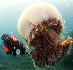Unhypsignathe monstrueux Albino Horse, Giant Jellyfish, Le Revenant, Transparent Fish, Giant Salamander, Giant African Land Snails, Coconut Crab, Percheron Horses, Atlas Moth