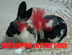 Check out this item in my Etsy shop https://www.etsy.com/listing/496942097/clothes-for-bunny-pet-clothes-puppy