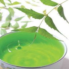 Neem oil can cure natural ailment for many reasons and it comes from neem flower plant. The oil is pretty famous in Asian regions because of its cultivation in Asia which makes it affordable and useful oil.