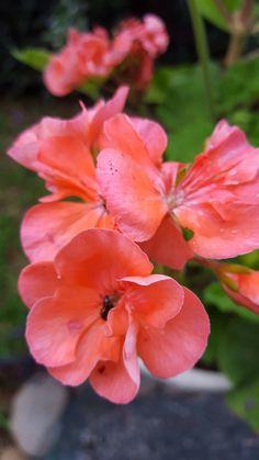 Geranio, nido jardin=vida