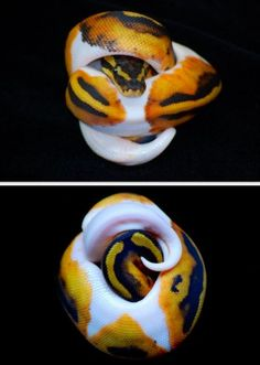 Piebald Ball Python in a ball Pretty Snakes, Beautiful Snakes, Animals Beautiful, Cute Animals, Reptile Habitat, Reptile Room, Python Royal, Cute Reptiles, Reptiles And Amphibians