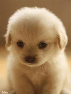 Коллекция очаровательных мини-открыток с животными. Обсуждение на LiveInternet - Российский Сервис Онлайн-Дневников