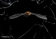 Buy Crystal Precision wall print - from Wildlife Photographer of the Year 52 - the Natural History Museum online shop Wild Life, Concours Photo, National History, Tier Fotos, Year 2016, Fauna, History Museum, Wildlife Photography, Photography Awards