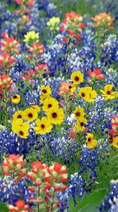Gotta love these wild flowers! Gotta love these wild flowers! The post Gotta love these wild flowers! appeared first on Easy flowers. My Flower, Beautiful Flowers, Cactus Flower, Exotic Flowers, Purple Flowers, Spring Flowers, Wild Flowers, Fresh Flowers, Blue Bonnets