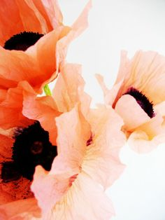 I gathered some pink poppies in the garden earlier on... Photo credit: Paola De Giovanni