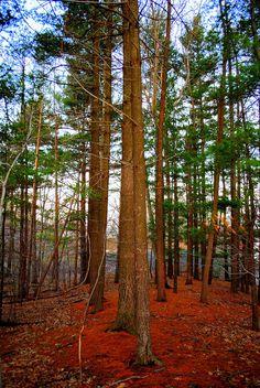 ✯ Colorful Carolina Forest