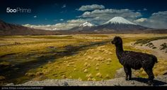 Once upon a time in the Andes - stock photo