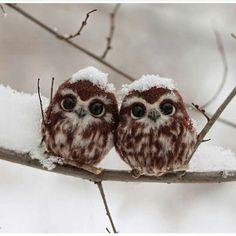 Yavru Baykuşlar / Baby owls