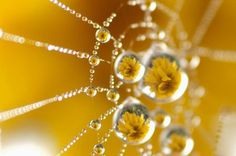 web dew Photo by Inmaculada Rodriguez -- National Geographic Your Shot