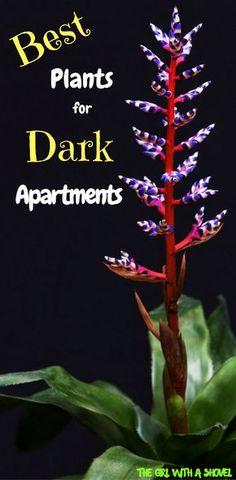Indoor Plants | Interior Plants No Sun | Low Light House Plants |