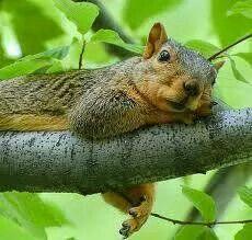 Superbe écureuil... ...