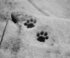 cat's paws in the snow