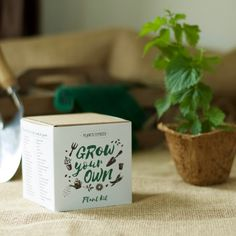 Beer Plant Hops Growing Kit - Grow Your Own - Pots, Pellets, Markers, Pot Trays & Seeds - With DIY Instructions by Plants From Seed on Gourmly Juniper Bonsai, Bonsai Styles, Forest Plants, Fast Growing Plants, Plant Markers, How To Make Beer, Farm Gardens, Potting Soil, Grow Your Own