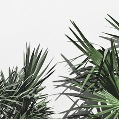 Pantone have released their 2017 colour trend predictions: 2017 will be the year of Greenery. Best Design Blogs, Fred Instagram, Pantone 2017 Colour, Colours 2017, Pantone Green, Color Of The Year 2017, Cactus, Good Vibe, Plants Are Friends