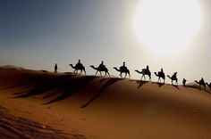 Camels in the Moroccan desert. Photo by Bachmont in 2007 (Flickr)