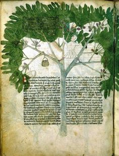 Medieval Food: Precariously perched in a fig tree...LOL