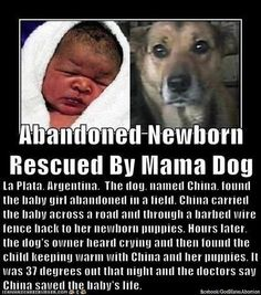 Abandoned Newborn Rescued By Mama Dog animals dogs baby dog amazing story animal pets stories pitbulls heartwarming I Love Dogs, Puppy Love, Cute Dogs, Animal Heros, My Animal, Animals And Pets, Funny Animals, Cute Animals, Faith In Humanity