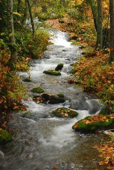 McNeil Creek~ Nanaimo, BC