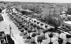 How Bauhaus came to Palestine Walter Gropius, Study Architecture, Josef Albers, Building Department, White City, Construction Worker, Flat Roof, Tel Aviv, Urban Planning