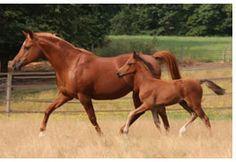 Horses in pasture - Equine Facility Design