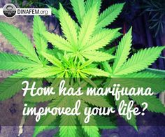 How has #marijuana improved your life? #MedicalMarijuana Dinafem.org/en/blog/c/medical/