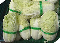 "Napa ""Chinese"" cabbage, the key ingredient in baechu kimchi"