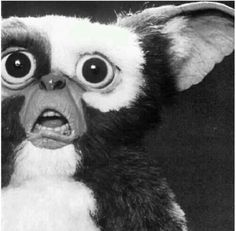 Member this lil guy?! .. Gizmo !... Grimlins !