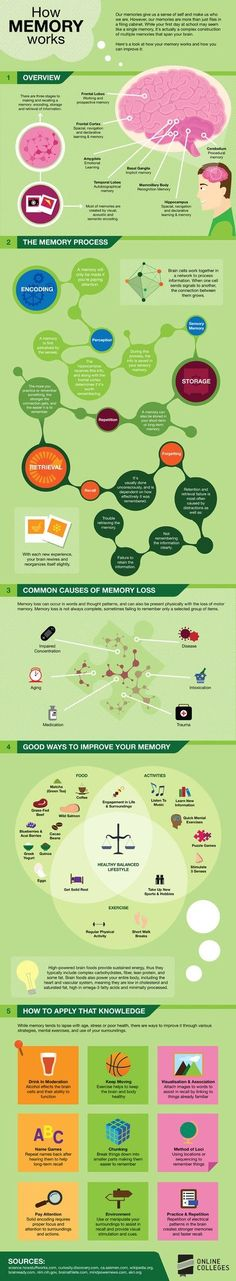 How-Memory-Works. Repinned by http://ottoolkit.com your source for geriatric occupational therapy resources.