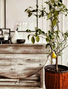 apetyczne wnętrze: zieleń w domu i jej mozliwości