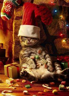 Funny Cat Raiding Christmas Stockings Design