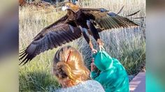 Photo Catches Eagle Trying to Snatch Little Boy During Bird Show at Australia Park