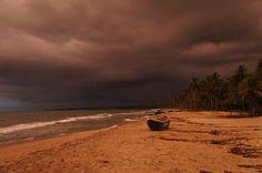 Palomino antes de una fuerte tormenta