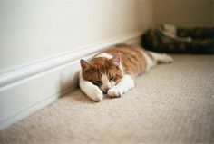 priveting:  JB by Lisa Smit on Flickr.Please check out my Vintage Cats blog <3