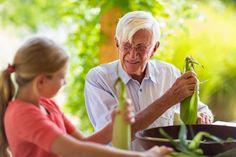Caucasian grandfather and granddaughter shucking corn - Caucasian grandfather and granddaughter shucking corn