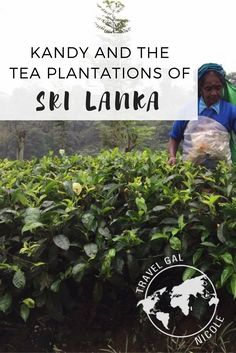One of the highlights of my time in Sri Lanka was visiting the central region and the tea plantations.  Not only because it didn't rain that day (seriously we had some of the hardest downpours ever while I was there – in the dry season) but because I was able to see the beautiful countryside and interact with the people.