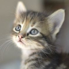am I so cutie patootie ??? :) #gatos #kitten #koty #cats   ...........click here to find out more     http://googydog.com
