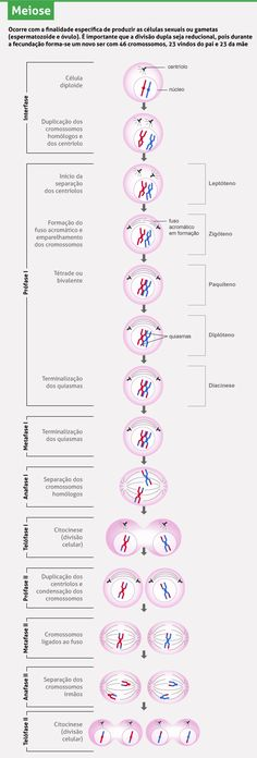 Cell division: mitosis and meiosis – samantha pinto – Join the world of pin Study Biology, Cell Biology, Molecular Biology, Science Biology, Medical Science, Science Notes, Animal Science, Study Help, Study Tips